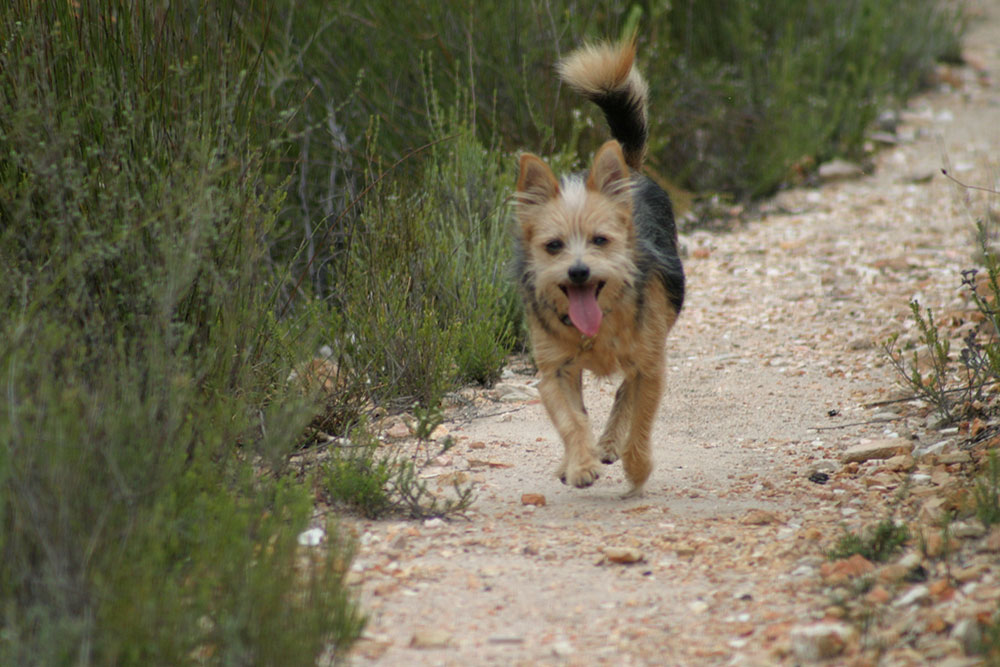 Pet friendly accommodation in Montagu